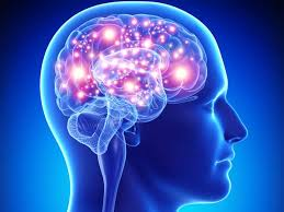 Help Your Child With Finals By Nurturing The Brain Help Your Child With Finals By Nurturing The Brain