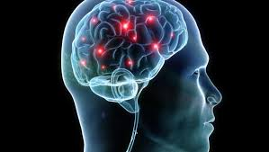 fg Protein, The Nutrient Enhance Brain Power