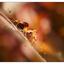Backyard Spider 2016 3 - Close-Up Photography
