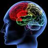 brain -  Karen Bonetti