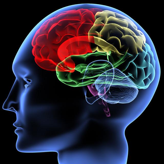 brain  Karen Bonetti