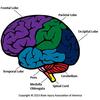 BrainRegions - New Ways to Boost Your Brai...