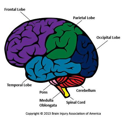 BrainRegions New Ways to Boost Your Brain Power