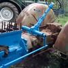 ZetorSuper 35 m23c - tractor real