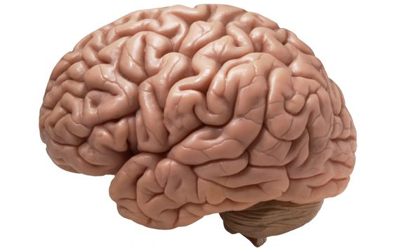 Some ingredients can help enhance brain