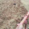 ZetorSuper50 m56 - tractor real