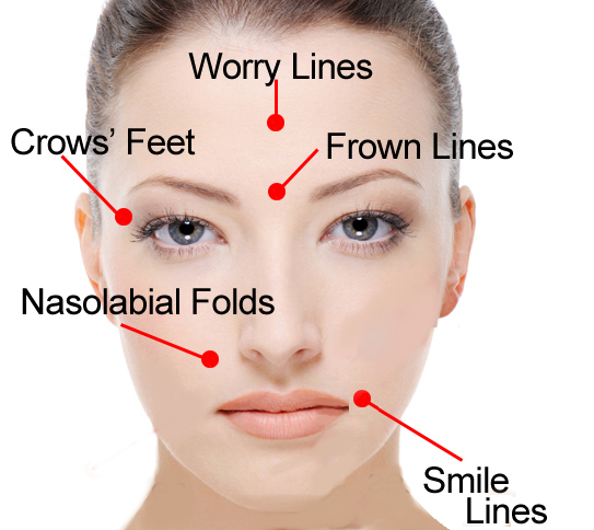 facial-muscles-and-wrinkles Image Revive