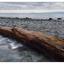 Seal Bay 2016 02 - Landscapes