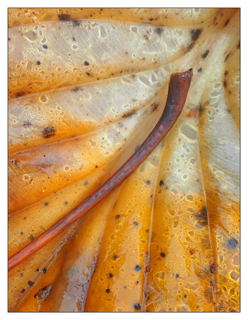Backyard leaves 03 2016 Close-Up Photography