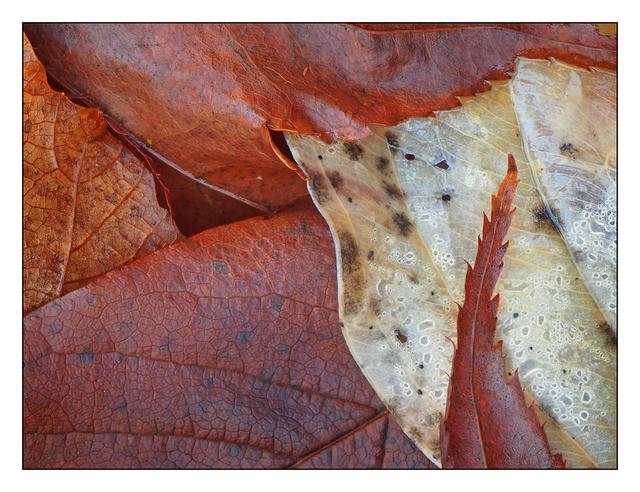 Backyard leaves 05 2016 Close-Up Photography