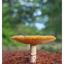 Mushroom at Lazo Park 2016 - Close-Up Photography