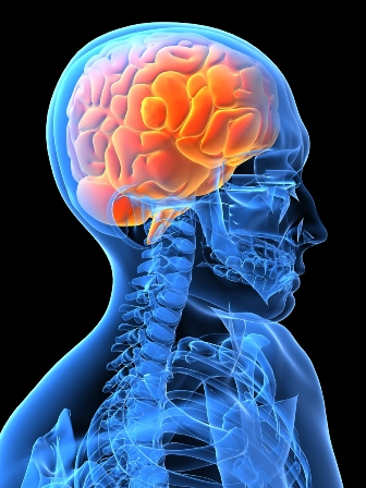 http://purelifegreencoffeebeanadvice brainbooster