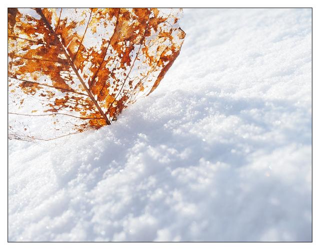 Snowy January 2017 02 Close-Up Photography
