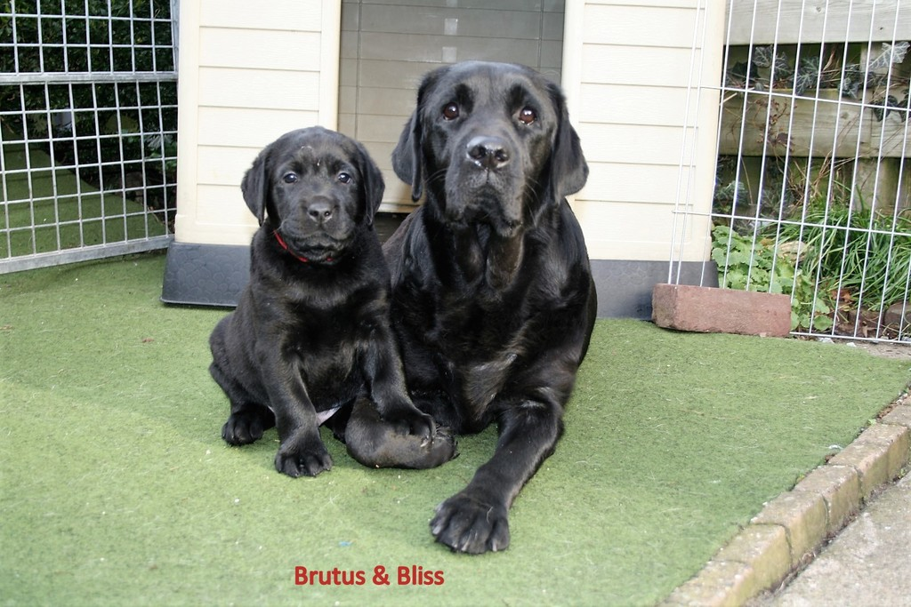 brutus en bliss - Picture Box