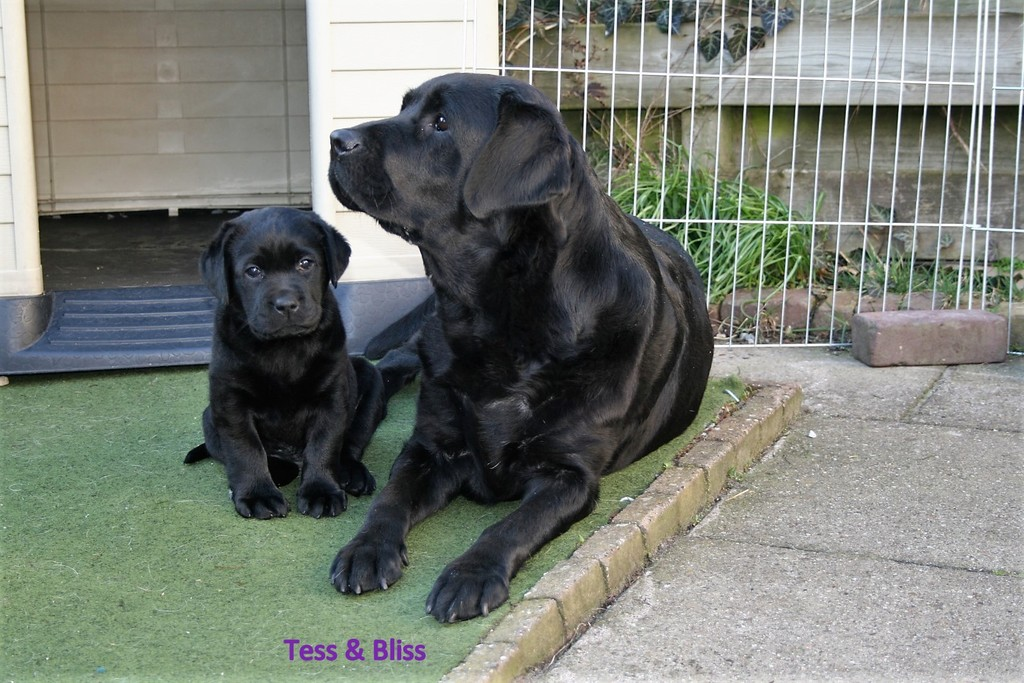 tess en bliss - Picture Box