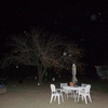 Behind The Tree Branches & ... - Orbs