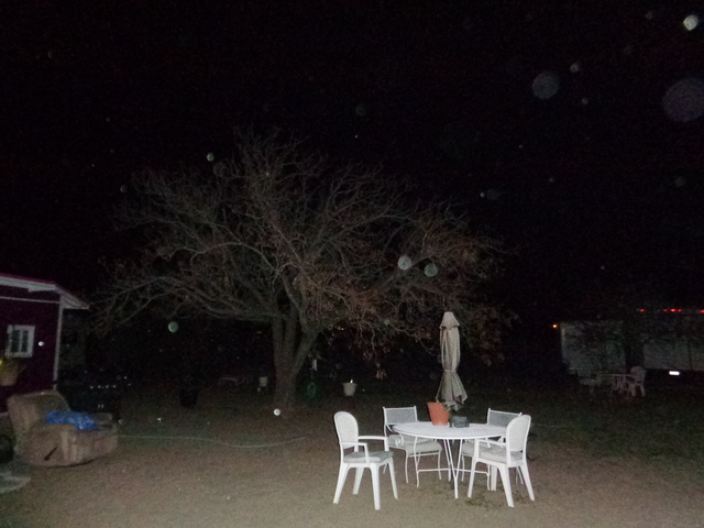 Behind The Tree Branches & Faces Orbs