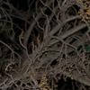 Little Emerald Orb In Tree ... - Orbs