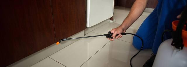 pest control sydney Pestige Solutions