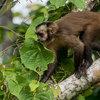 Tambopata National Reserve - Monte Amazonico