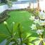 garden maintenance services - Perth Gardening
