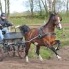 thumbnail westerkwartier - balingehofforum