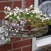 Tuin 29-04-17 7 - In de tuin 2017