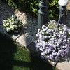 Tuin 06-05-17 - In de tuin 2017