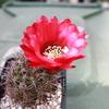 IMG 0302 - cactus