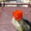 P1020392 - cactus