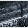 Amsterdam Bikes 4 - Netherlands