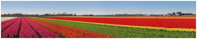 Keukenhof Panorama 1b Benelux Panoramas