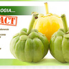 Why You Should Utilize Green Garcinia Gold!