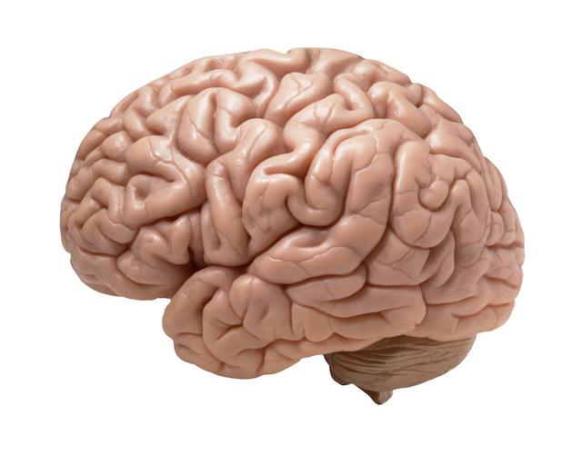 984803-brain Picture Box