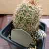 P1020475 - cactus