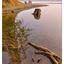 Comox Lake 06 2017 - Landscapes