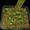 P1020502 (2) - cactus