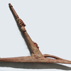 prowhook-82x65-cm 358282483... - melanesische kunst