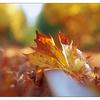 Autumn Tracks 2017 6 - Comox Valley