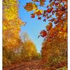 Autumn Tracks 2017 1 - Comox Valley