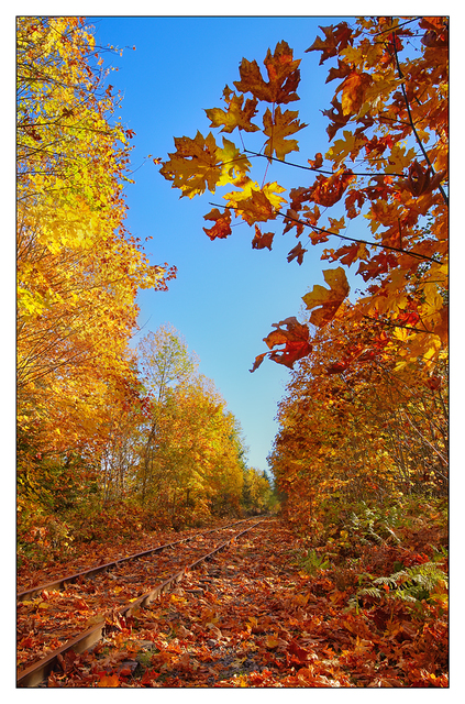 Autumn Tracks 2017 1 Comox Valley