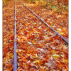 Autumn Tracks 2017 2 - Comox Valley
