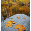 Tsolum River 2017 4b - Landscapes