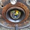 IMAG0497 - bearing