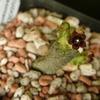 P1020537 - cactus