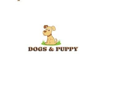 Puppy Training Dog Training Courses