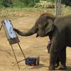 Elephant Encounter Thailand - Elephant Encounter Thailand