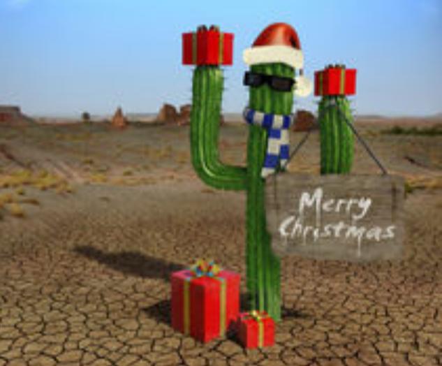 IMG 20171217 164931 Cactus