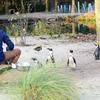 31 - brabant dierentuinen