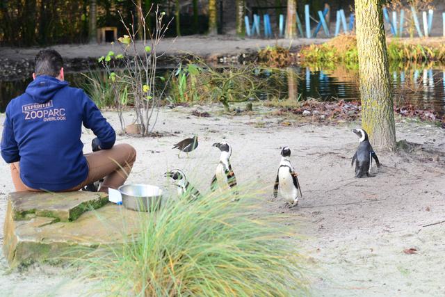 31 brabant dierentuinen